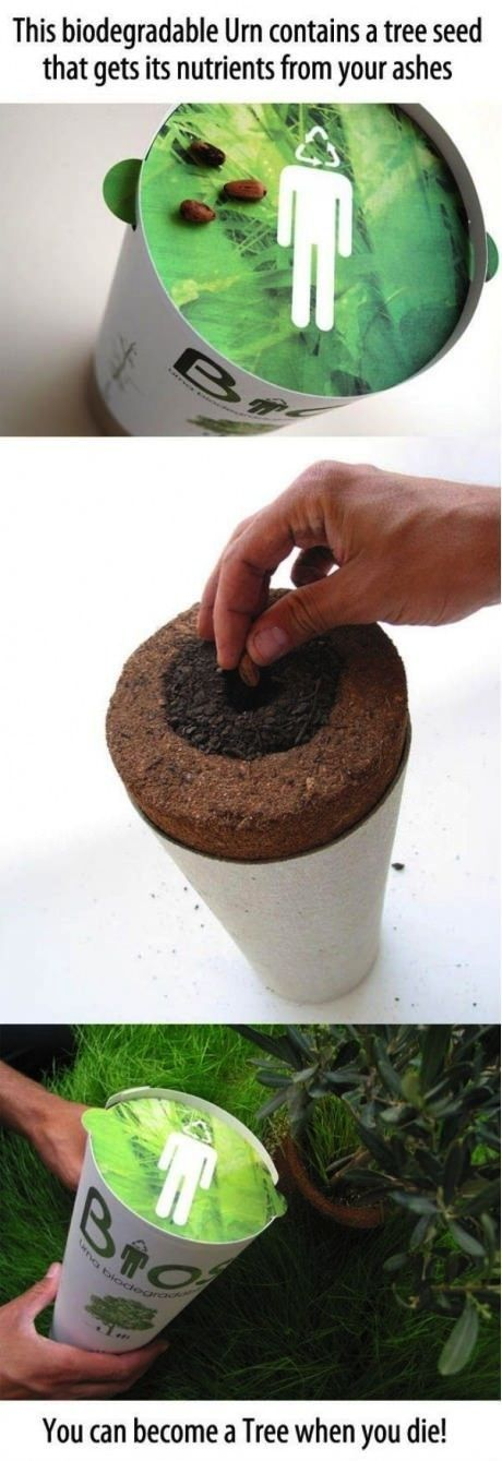 Biodegradable Urn. A tree grows from your ashes. ---- love this! i will haunt my family if they try to bury me after I'm gone.