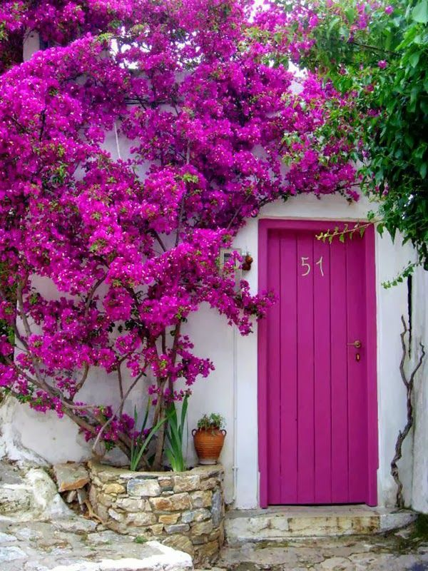 Boho design - magenta purple pink violet front door and flower bush tree doorway house entrance boho moroccan interior design