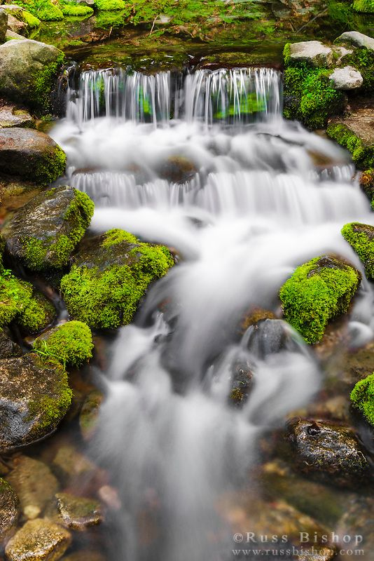 Fern Spring, Yosemite National Park, California USA / © Russ Bishop ~ Click image to purchase a print or license