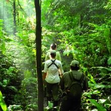 Explore the southern Amazon Basin, Lima, Southern Amazon and Cuzco - Peru