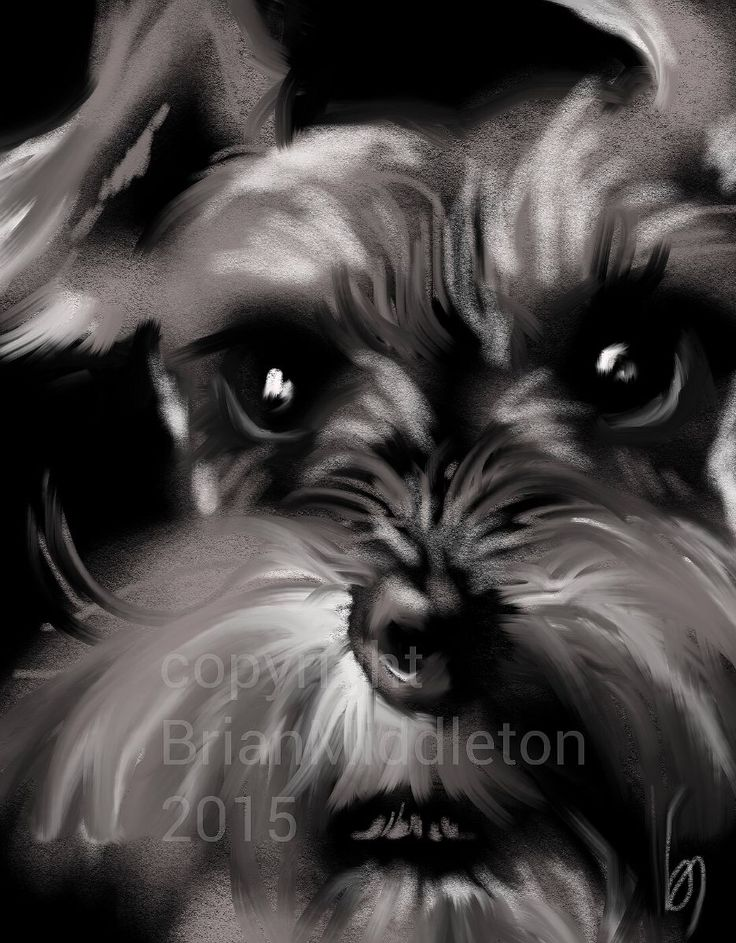 This is a digital painting I just made of a mini-schnauzer. I used Procreate painting app. Copyright : Brian Middleton 2015 *and YES....I do commissions.