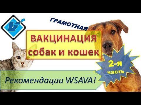 Вакцинация собак и кошек. Рекомендации WSAVA (2017). Часть 2.