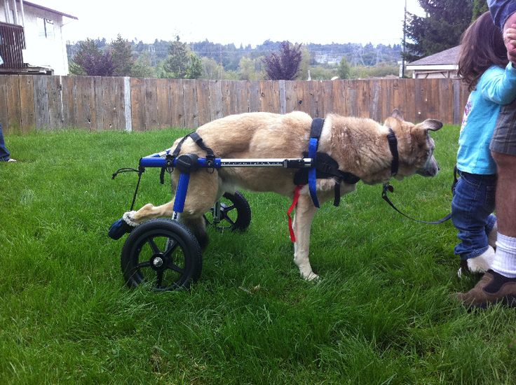 Wheelchair Carts For Dogs – Billy Knight
