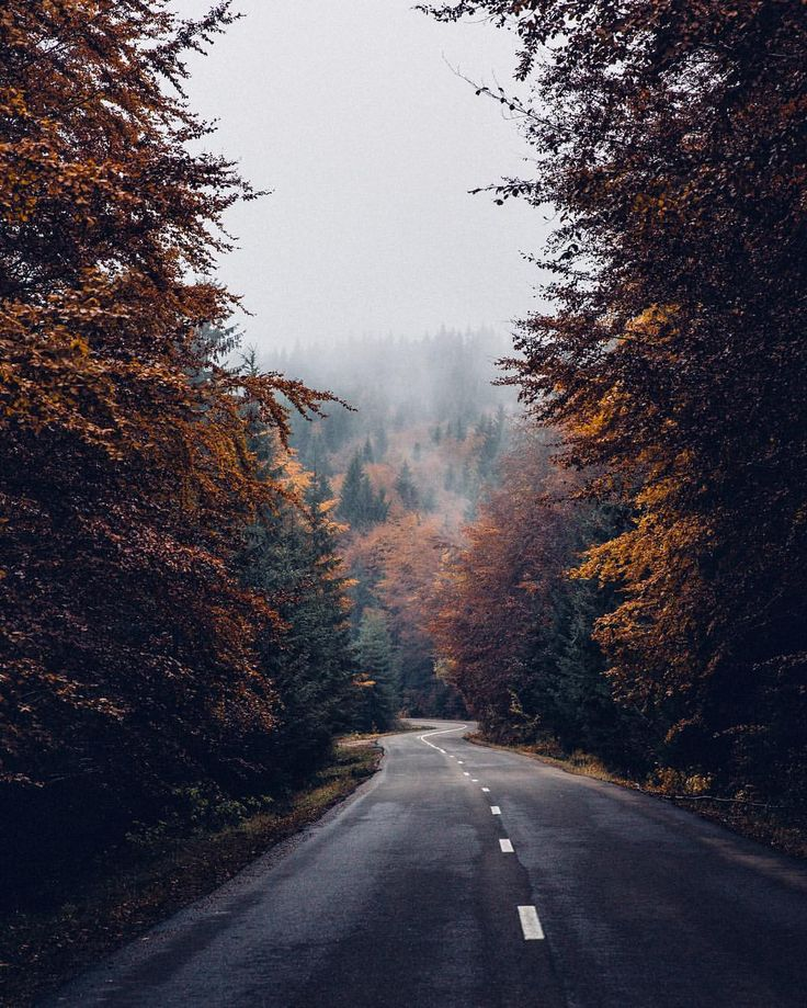 "The Future Kept on Instagram: ""The road that feels like being in an Autumn movie, one of those places that didn't seem real, a journey surrounded by so much gold, mist and mystery. Have a great Thursday all! ✌️"""