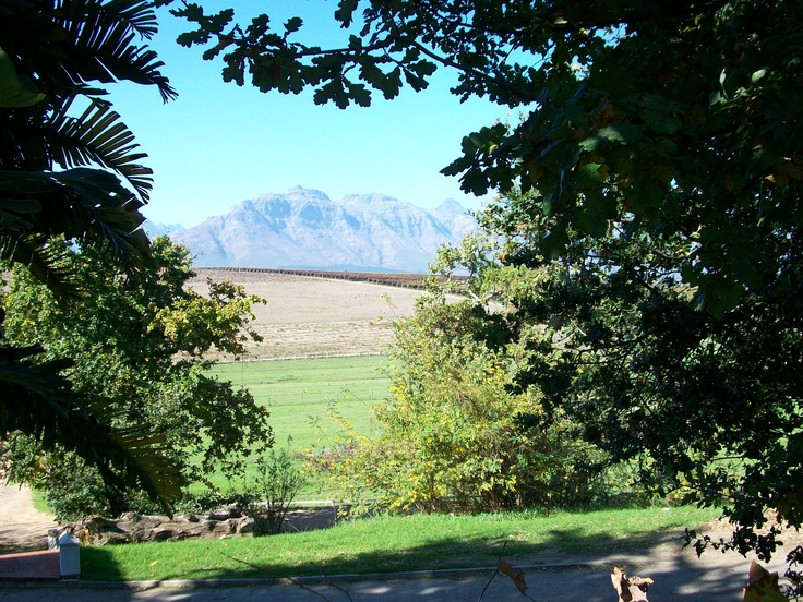 Stellenbosch -- wine country in the Western Cape of South Africa.