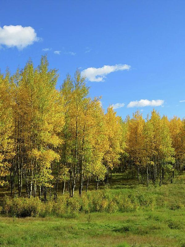Fall colors at Kenosha Pass, Colorado- Fine Art Print by Connor Beekman Photography