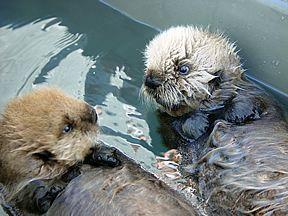 Alaska (Seward) - Alaska SeaLife Center