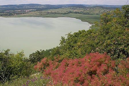 """Balaton-felvidéki Nemzeti Park _____________________________ """"Természeti értékei sajátosak, némelyik egyedül csak e térségre jellemző, pl. a Tapolcai-medence tanúhegyei, a Balaton, vagy a Kis-Balaton. A nagy tájképi egységek, mint a nagykiterjedésű tófelszín, mocsárvilág, síkságok, medencék, tanúhegyek és hegységek elősegítették a gazdag élővilág kialakulását, és fennmaradását."""""""