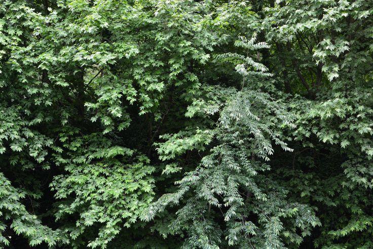 Green, greener, the greenest... Yeşil, daha yeşil, en yeşil...