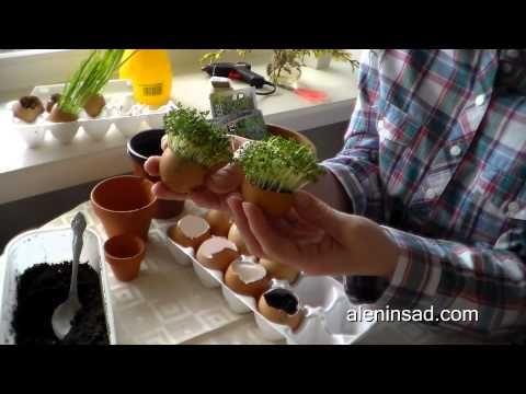 Поделки к Пасхе. Часть 1. Выращивание травы в яичной скорлупе. Травянчики — Алёнин сад