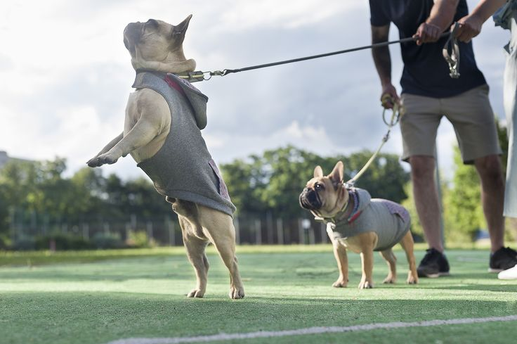PawPawPaw handmade comfortable and warm Sniffy's Hoodies, Leather Hafen Collar in Grey and Yellow and Rope Hafen Leash in Grey | Dog apparel & accessories | Pet fashion | Online shop coming soon