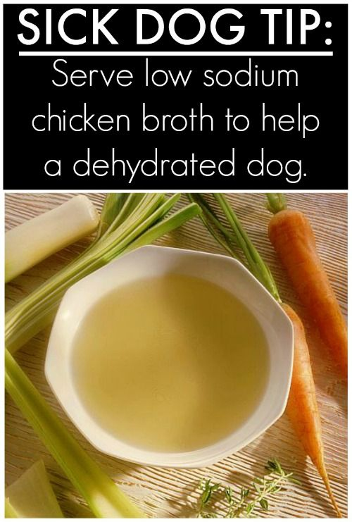 Is your dog sick? Try this Homemade Chicken Broth for Dogs – great for a dog that is dehydrated. and Tips & Hacks For Your Dog ...that you wish you knew a long time ago on Frugal Coupon Living.