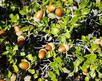 ΠΑΛΑΙΟΧΩΡΙΟΝ ΤΥΜΦΡΗΣΤΟΥ (ΟΜΙΛΑΙΩΝ) ΦΘΙΩΤΙΔΟΣ: Βότανα