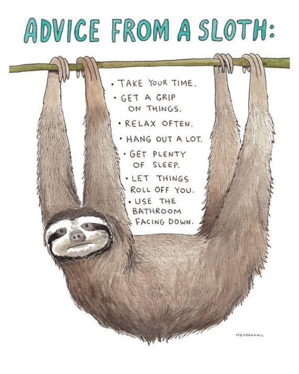 Advice from a sloth                                                                                                                                                      More