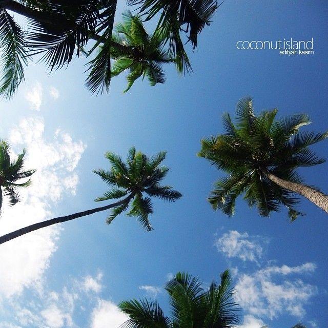 Coconut island Matako Beach, Tojo Una Una Barat, Central Sulawesi, Indonesia February 2011 #Coconuttrees #leisure #centralsulawesi #sky #blue #coconut #island #traveling #awesome