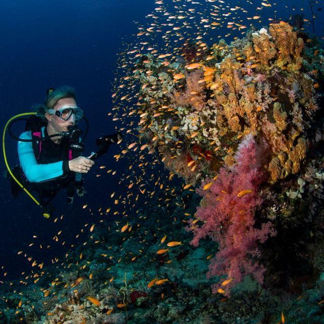 Pristine reefs, great pelagic fish...good stuff!!