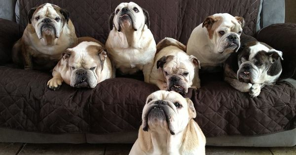 Sell and buy #puppies at dogspuppiesforsale.com #dog #puppy #puppiesforsale #cutepuppies #puppiessale #sellpuppy #buypuppy #sellpuppies #buypuppies #pets #dogs