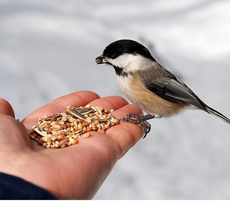 I love Chick-a-dees!!: Featheri Favorite, Birds Feeders, Birds Feeding, Feeding Wild, Hands Feeding, Inspiration Quotes About, Feeding Birds, Birds Eating, Wild Birds