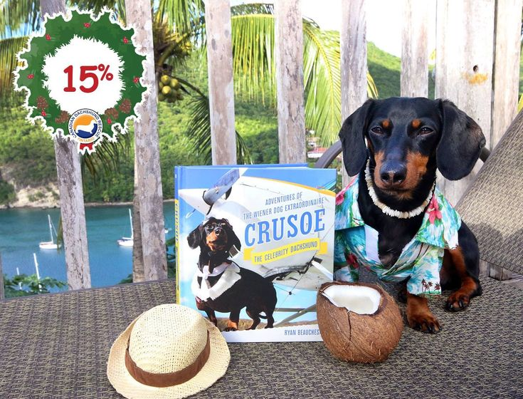 Crusoe The Celebrity Dachshund Book - imageemr.org