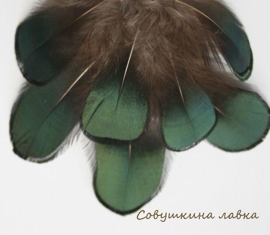 Купить Перья фазана зеленые - перья, перья птиц, Перья натуральные, перья фазана