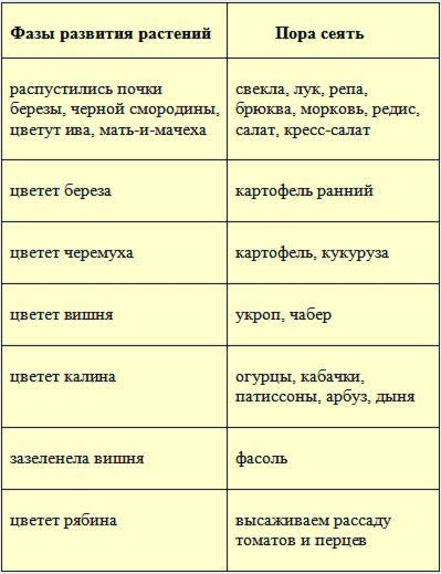 когда садить фасоль в открытый грунт в сибири: 12 тыс изображений найдено в Яндекс.Картинках