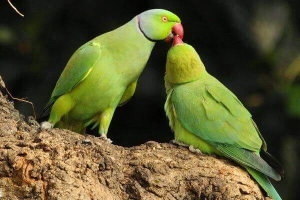Curiosidades Y Respuestas A Todas Tus Preguntas Cotorro Avistamiento De Aves Loros