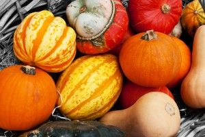 Types of Squash - types of squash, how to choose and prepare each type!