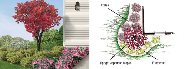 1000 images about plants and trees on pinterest for Accent tree for corner of house