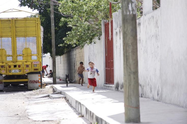 Piden sanción legal contra maltrato de animales en Yucatán