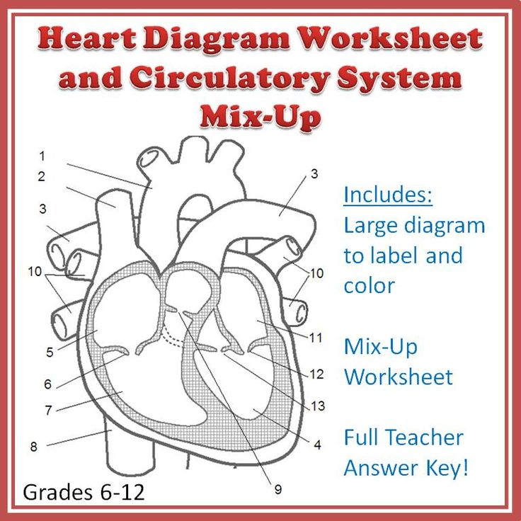 38 best images about Cardiovascular system on Pinterest
