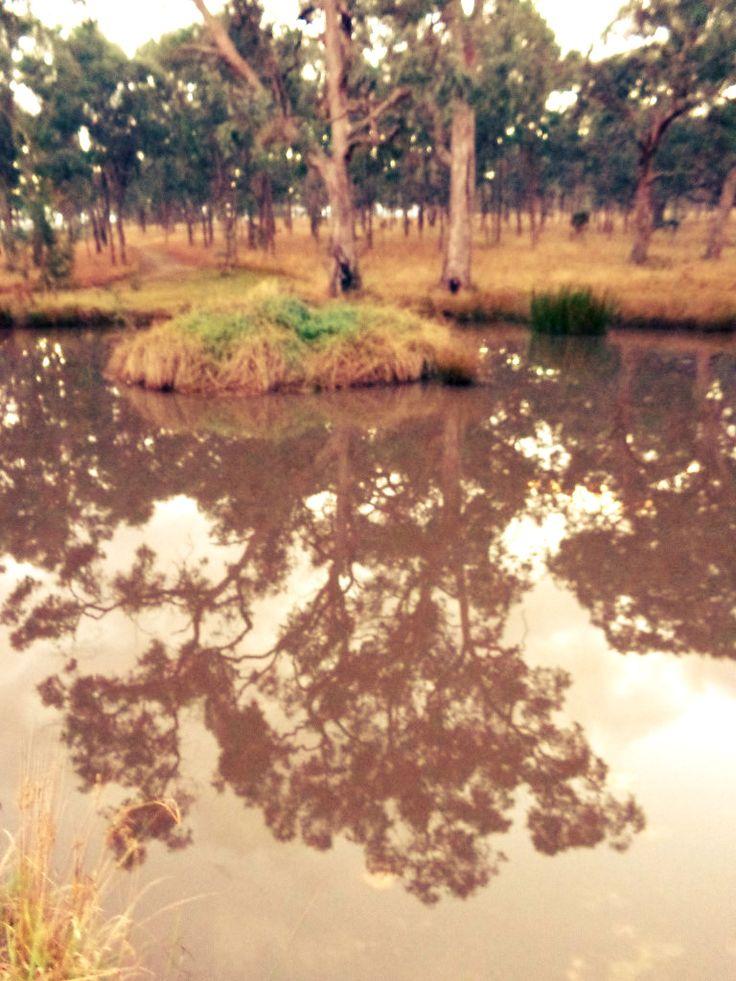 Tenterfield Reflections