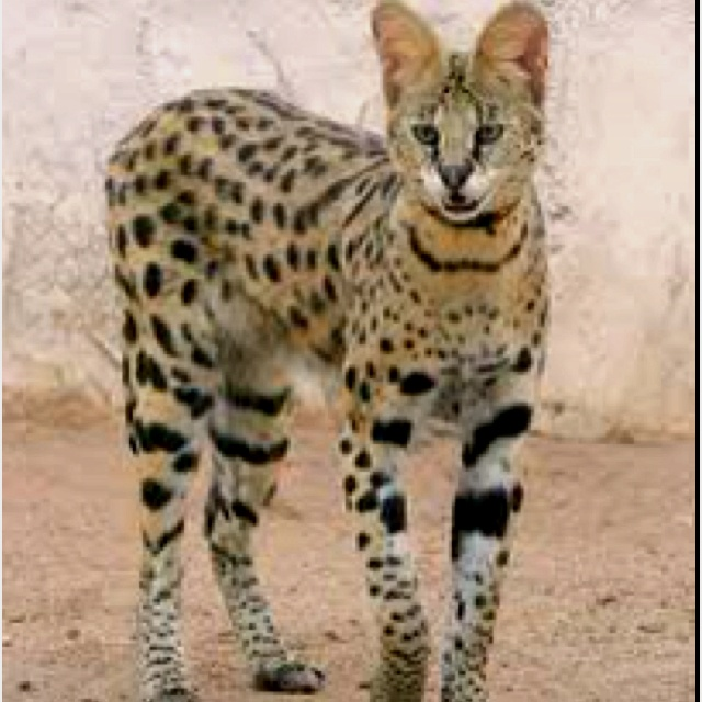 F1 savannah... You will be mine once I'm done with school