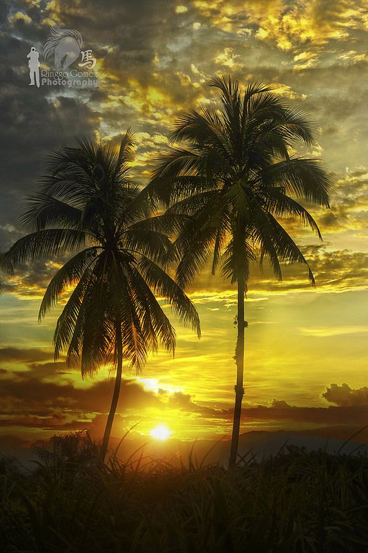 tropical sunset palm tree - photo #16