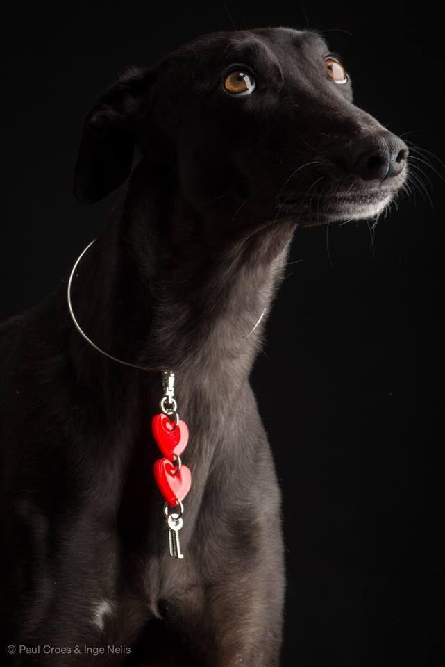 Greyhound - Imgur