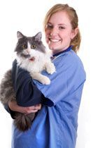 Treating Cat Skin Conditions with Coconut Oil (& for treatment of fleas) (dogs too)
