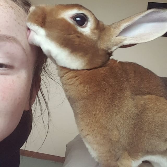 mini Rex rabbits look like they have a good personality!