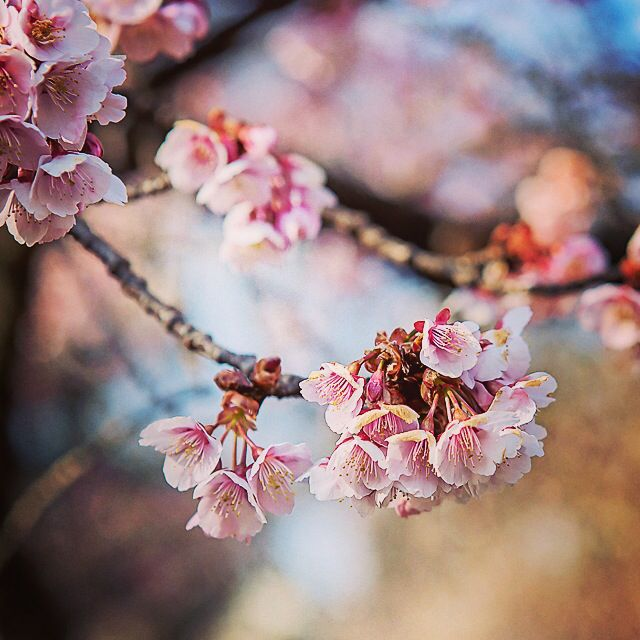 Blossoms, new beginnings