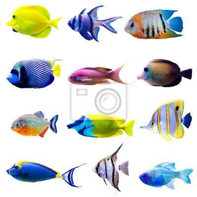 Fotobehang Tropische vissen collectie