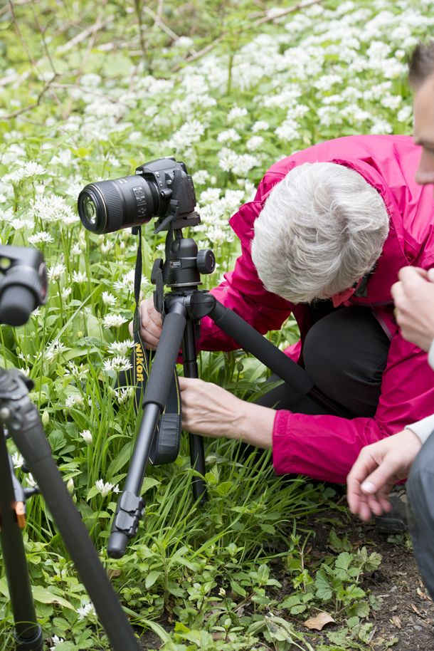Macro nature photography: tips for taking pin-sharp close-ups of flowers and insects