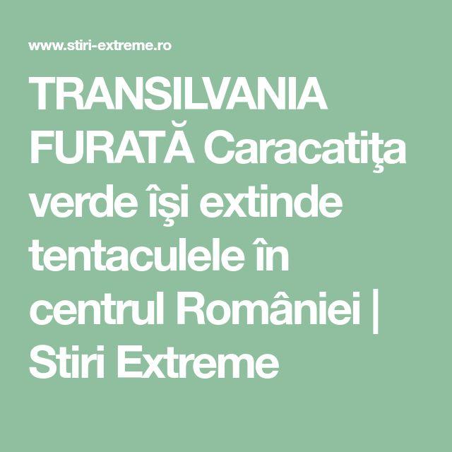TRANSILVANIA FURATĂ Caracatiţa verde îşi extinde tentaculele în centrul României | Stiri Extreme
