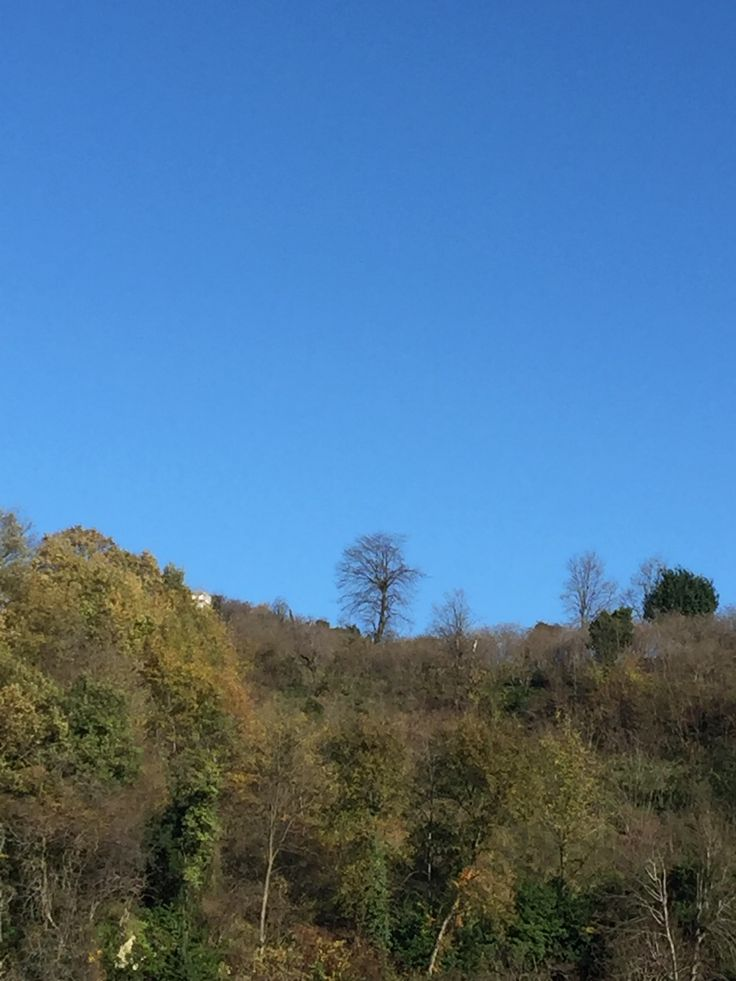 Fatsa- Bolaman- Yalnız ağaç
