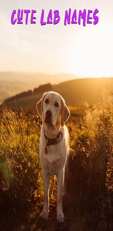 Best Dog Names For Labrador Retriever In 2020 Dog Names Best Dog Names Puppies Names Female