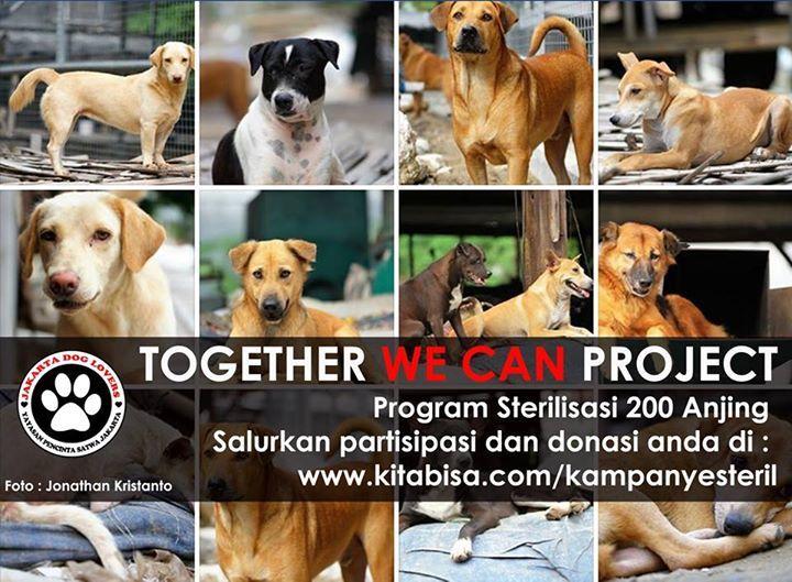 Sepanjang Tahun 2017, Komunitas Jakarta Dog Lovers mengajak para pencinta anjing untuk bersama-sama membantu melaksanakan program steril untuk anjing-anjing tak berpemilik yang saat ini berada di shelter / penampungan di Jakarta, Bogor, Depok, Tangerang dan Bekasi. Tujuannya adalah untuk mengendalikan populasi anjing terlantar yang ada di Jakarta agar tidak dianggap menjadi wabah.  In 2017, the Jakarta Dog Lovers Community invites dog lovers to get together to help implement the program for…