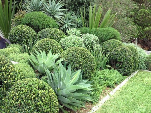Who has time to keep all those shrubs cut into perfect little balls? But it's such a nice idea contrasting those spiky agaves with the rounded shrubs!