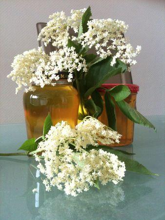 Fleurs de sureau - Plante médicinale anti-inflammatoire, anti-allergique