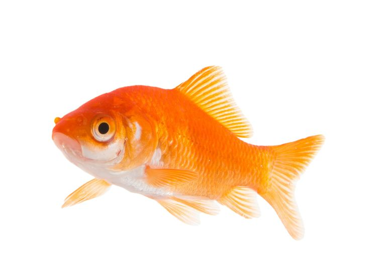 Siamo pesciolini rossi , onesti, corretti e concorrenziali rispetto al mercato che è carissimo e spesso disonesto tipo squali o pirana