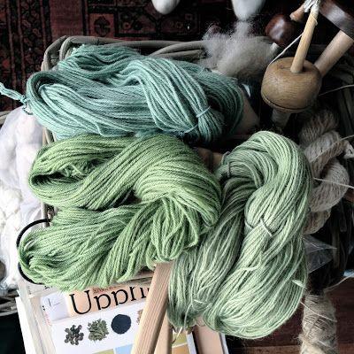 Lupine dyeing - Lupinus nootkatensis   NaKIN soap blog