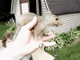 Squirrel Scritches