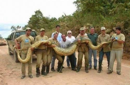 World's largest snake.