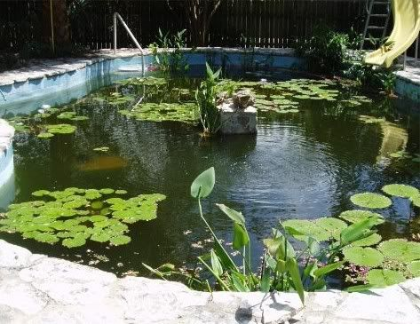 65 best pool to pond conversion and building ponds images for Pool to koi pond conversion
